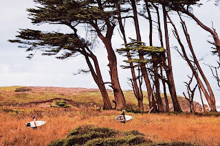 California Surf Project Cool Trees Landscape