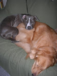 My doggers