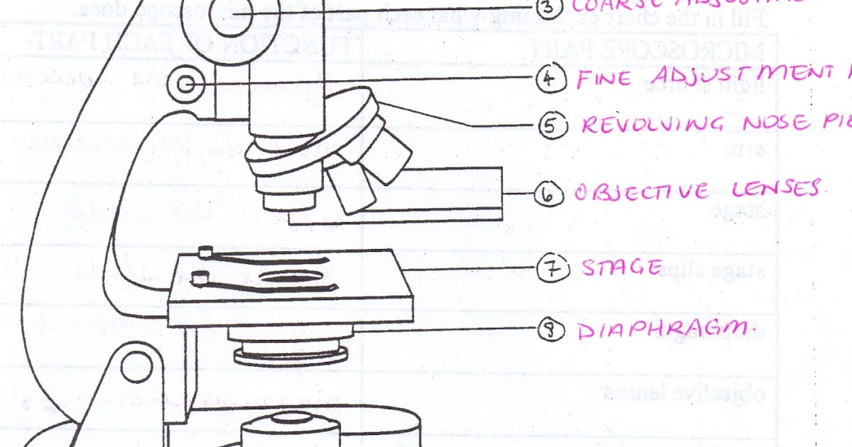 Animal Cell Diagram With Labels And Functions Sewing Machine Parts Worksheet All Saints Online: For Labelling: Microscope