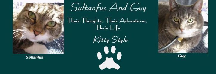 Sultanfus And Guy's Kitty Blog