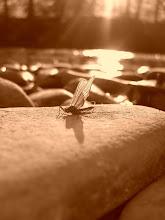 El Rincon del Mosquito
