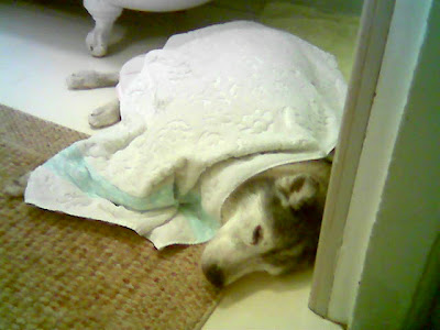 Image of damp Muki under a towel