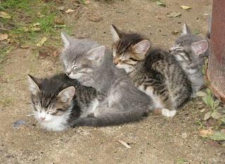 Family Time: Cats sleeping train in Postprandial Slumber
