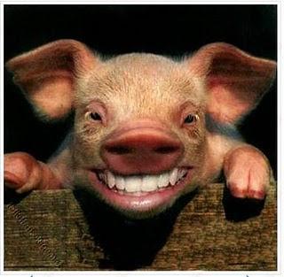 Foto Babi Di Potong Kusnadiyono Proses Pemotongan Babi Yg Baik Dan Benar