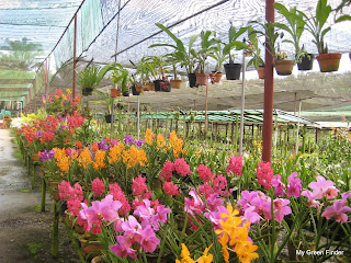 It Looks Like Kl Orchid Garden Except That This One Is Much Ger And Awesome Nursery There Are Orchids Of All Kinds Colours Spread