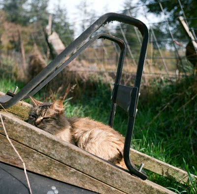 feral cat photo on a wheelbarrow