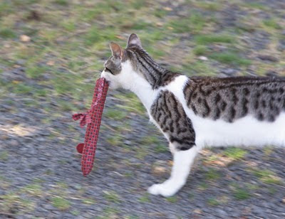 Mort the Cat loves to play with his snakey mouse homemade cat toy