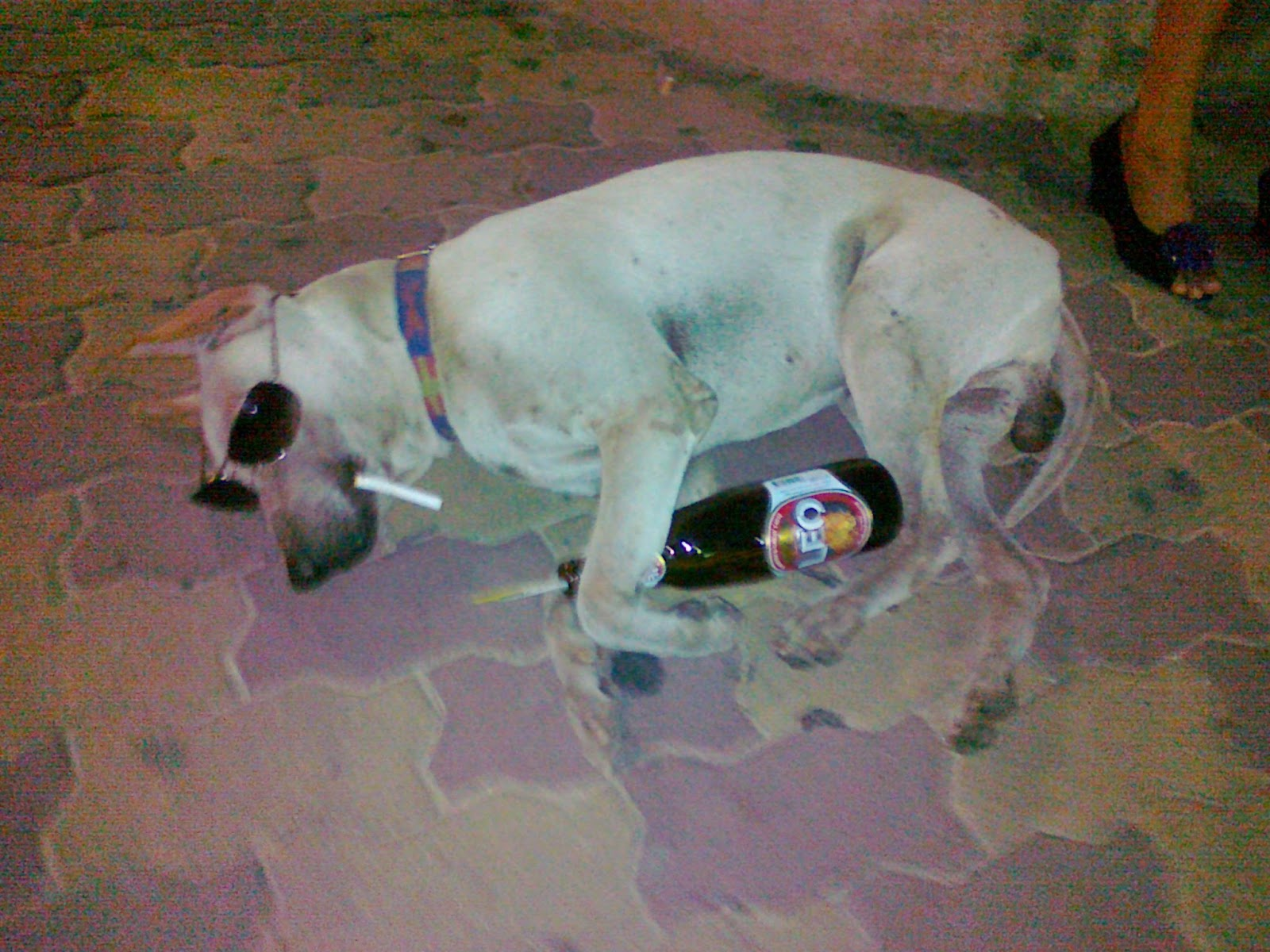 Koiran Tarha