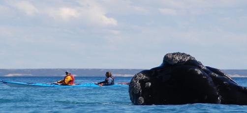 Travesía en kayak Aventura, naturaleza, historia y cultura de la región Patagónica.