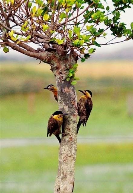 Folly Imagens: Pássaros