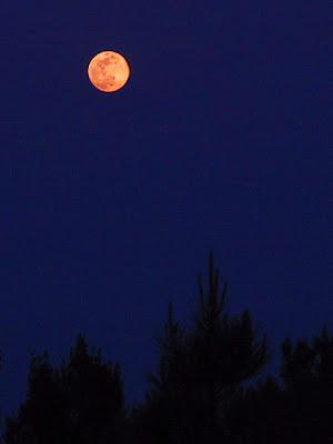 foto: lua cheia e vermelha balança e gira no céu noturno, como um convite ao amor