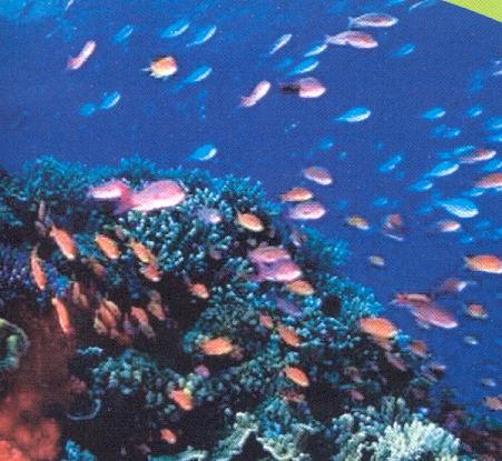Ceddet grupo4 origen del nombre panam for Peces que se cultivan en estanques en panama