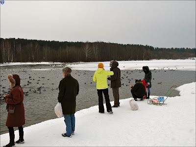 Паломники к лебедям в Ждановичах