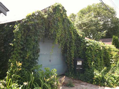 Different angle on the garage completely covered in green cascading vines