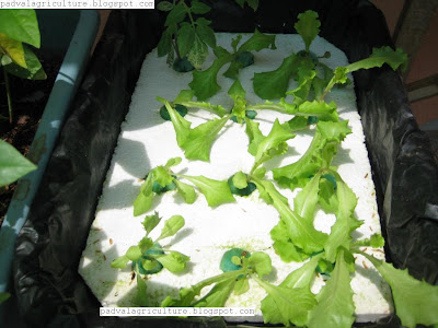 Hydroponic Fodder System Can Vinyl Gutters Be Used For