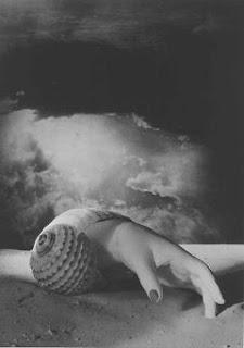 Dora Maar, Coquillage, 1934