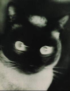 Umbo - Cat, 1927