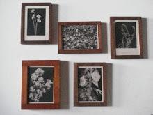frames florals