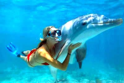 https://i1.wp.com/1.bp.blogspot.com/_k7tSLPM1eMg/TVDZeaeD7bI/AAAAAAAABWw/6rmdVxe0daE/s1600/Swim-with-dolphins.jpg