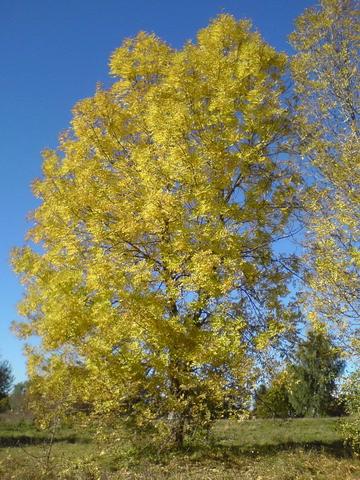 Image:Autumn 1