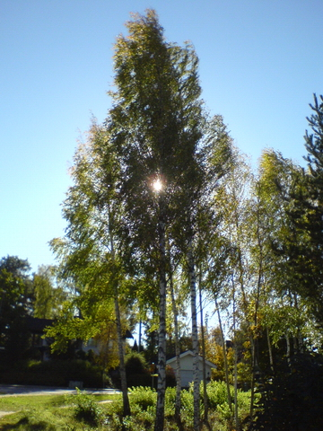 Image:Autumn 3