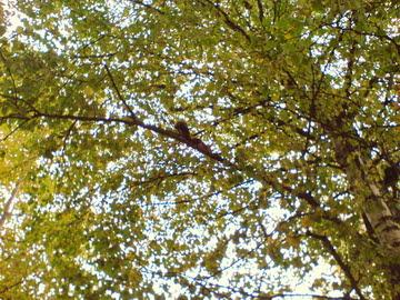 Image:Autumn 5