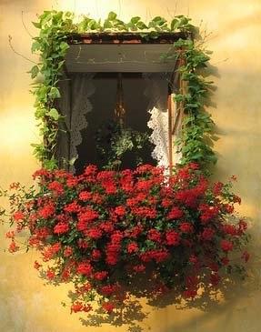 Ocio jard n jardineras en las ventanas for Ocio y jardin