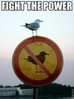[Conneries] Ca fait rire les oiseaux... - Page 38 1205711972654