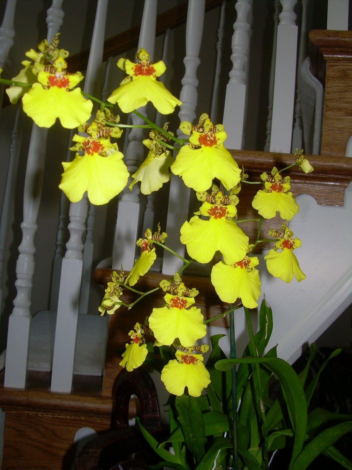 Orchids And Ikebana November 2010