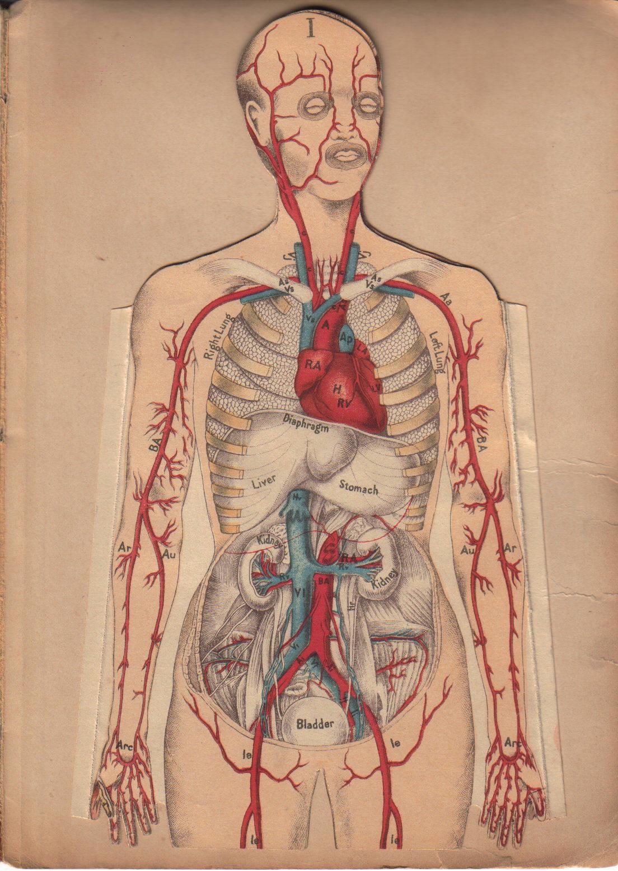 [Anatomy.jpg]