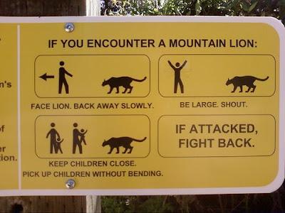 Como se defender de um leão montanhês