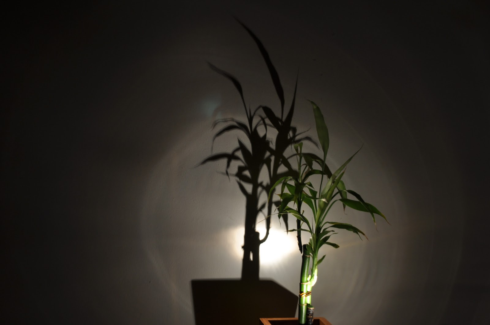 Gonzalo S Blog Natural Vs Artificial Light