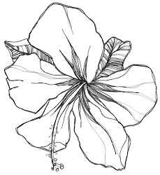 flower drawing flowers easy drawings orchid gladiolus rose simple hibiscus power draw coloring illustration colouring national plant orchids malaysia pages