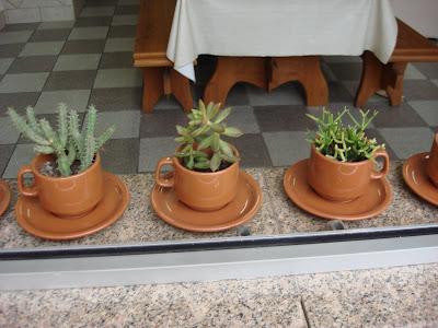 como plantar - suculentas-na-xicara