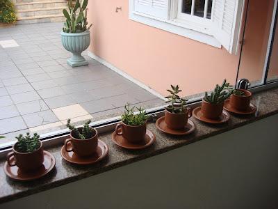 como -plantar - suculentas-na-xicara