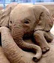 Unknown Artist - Sand Sculpture of Baby Elephant (2008)