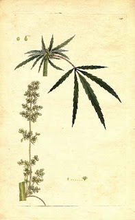 Cannabis, Hemp, History, Holland, Marijuana, Netherlands