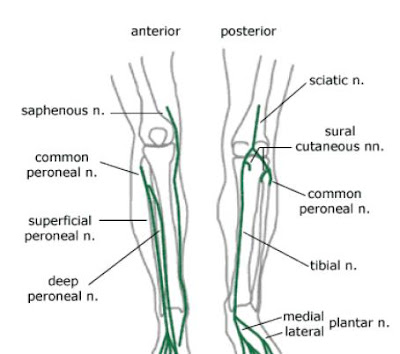 Anatomy of Foot and Ankle | Podiatry