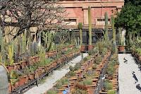 Botanical Garden - Cacti - Palermo, Sicily