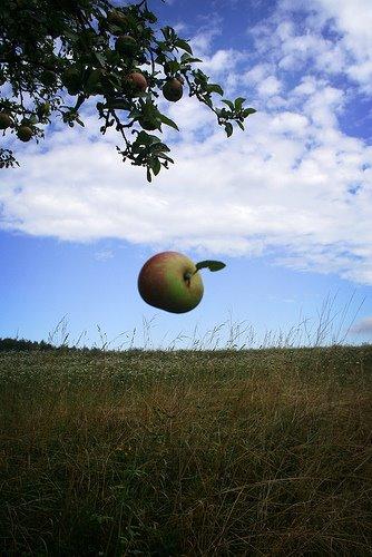 [Falling Apple.jpg]