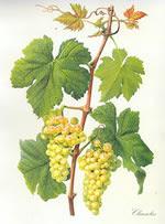 Lien de la Vigne