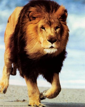 https://i2.wp.com/1.bp.blogspot.com/_kmbyaPPBCV4/SmAZUK06USI/AAAAAAAAATo/hpciEd0qVxE/S668/ron-kimball-lion-running.jpg