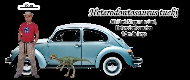 Heterodontosaurus tucki a escala.