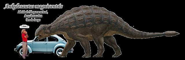 Ankylosaurus magniventris a escala.