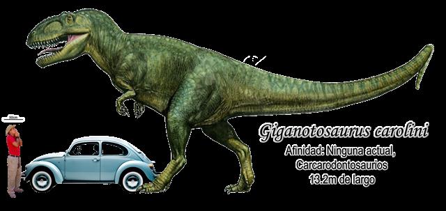Giganotosaurus carolini a escala.