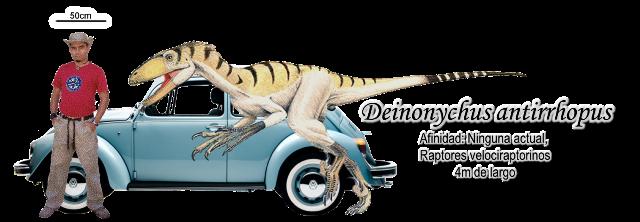 Deinonychus antirrhopus a escala.