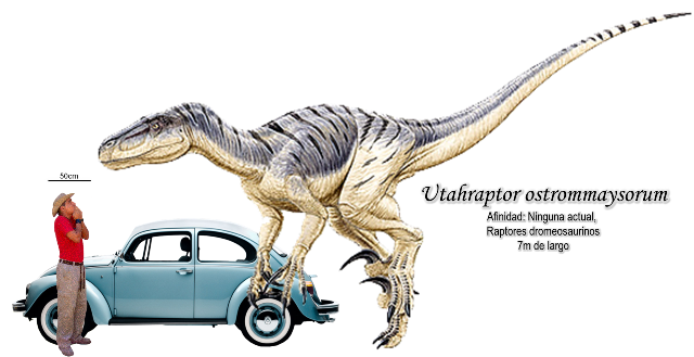Utahraptor ostrommaysorum a escala.