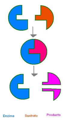 Modelo llave cerradura ejemplos