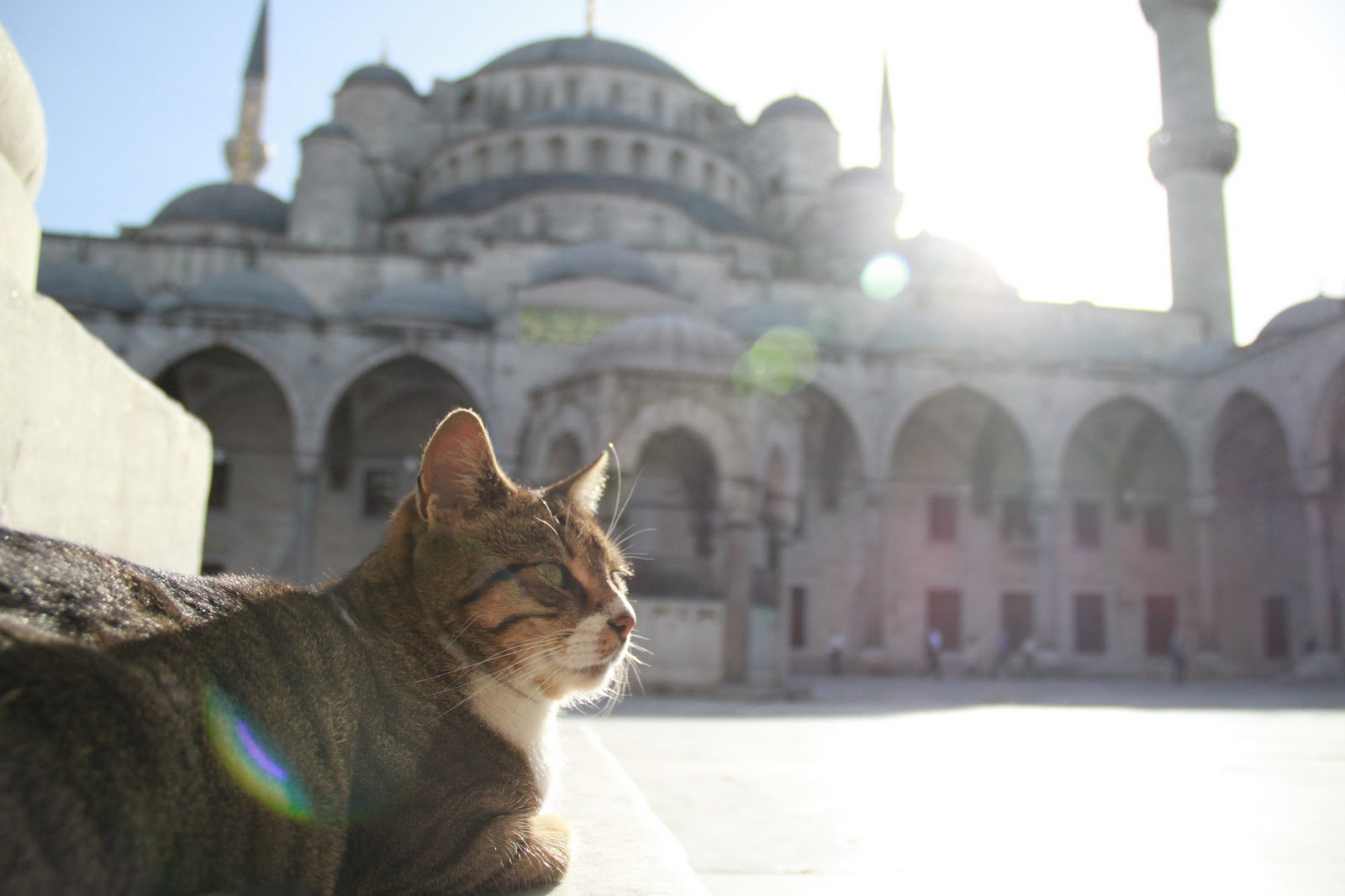 Muezza The Cat: Animals in Islam: Signs of God, Animal