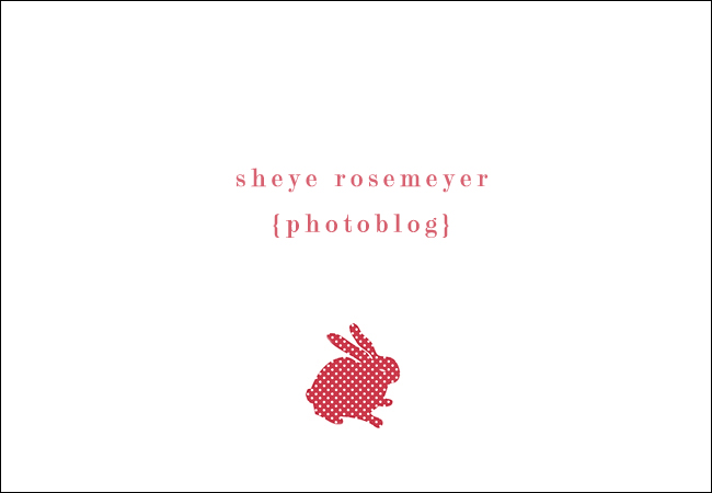 Sheye Rosemeyer Photography